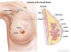 types of breast cancer