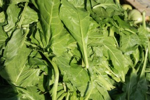 spinach fight cancer